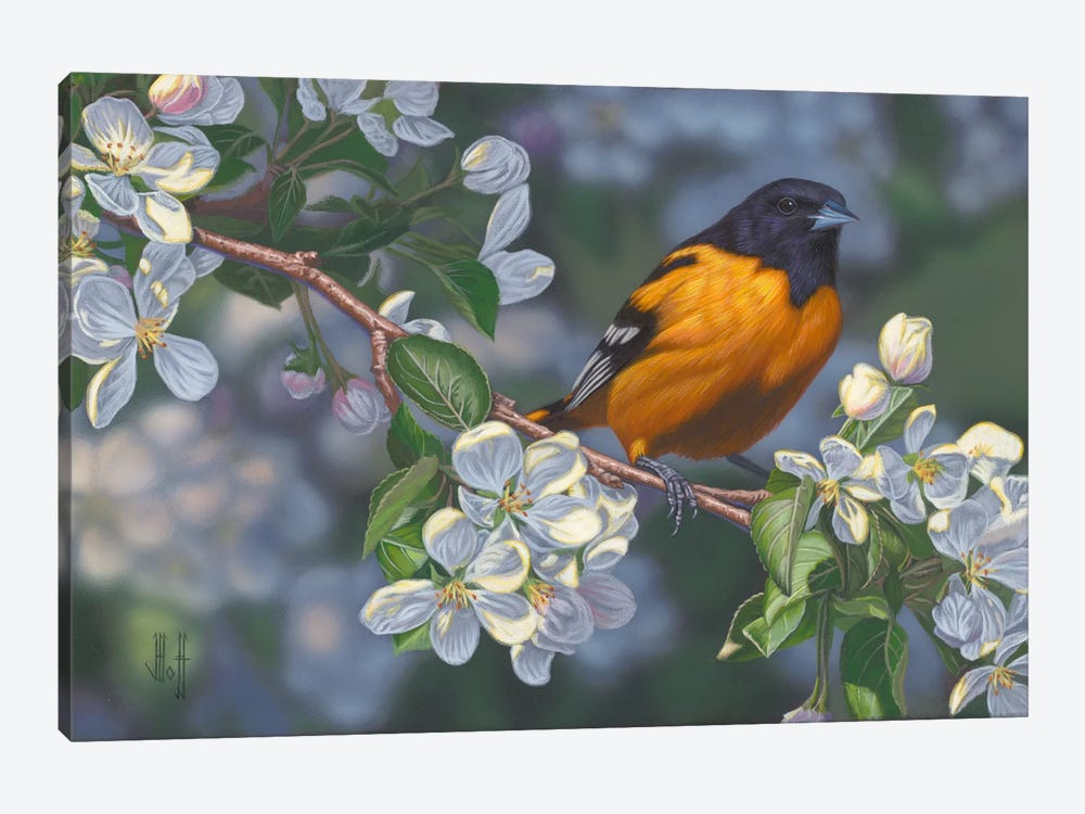Oriole & Apple Blossoms by Jeffrey Hoff 1-piece Canvas Artwork