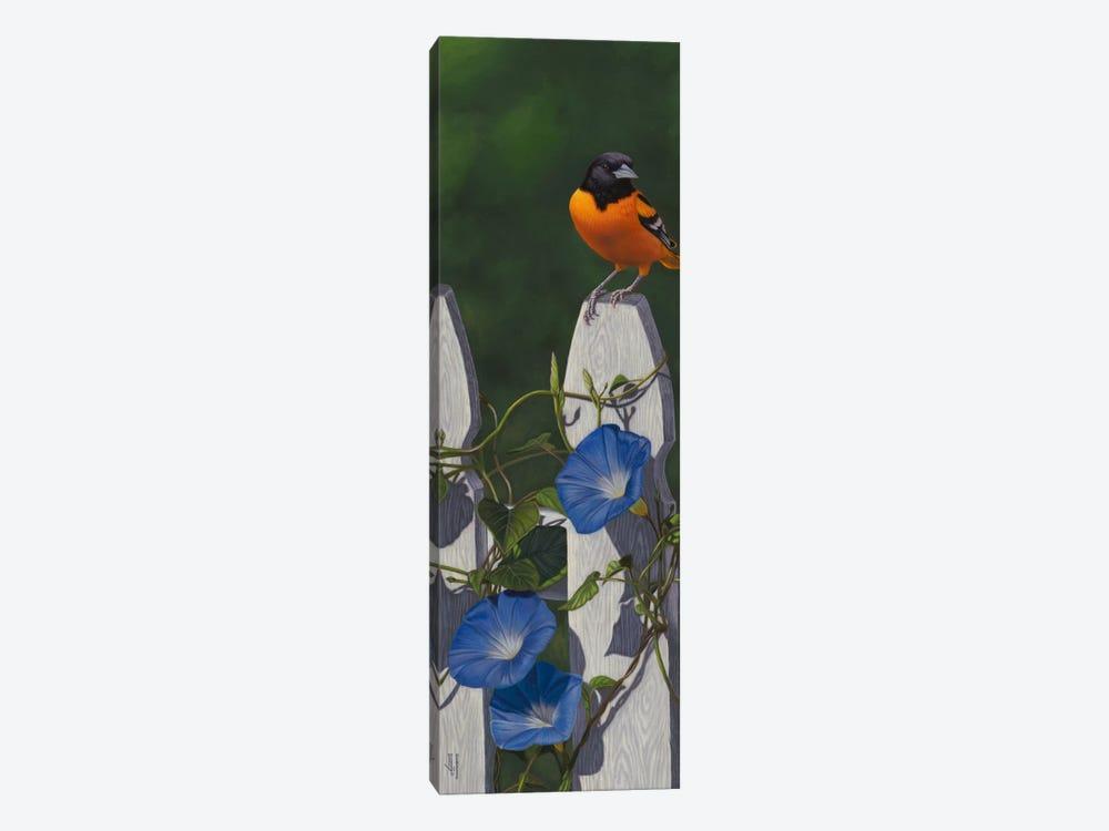 Oriole & Morning Glories by Jeffrey Hoff 1-piece Canvas Art Print