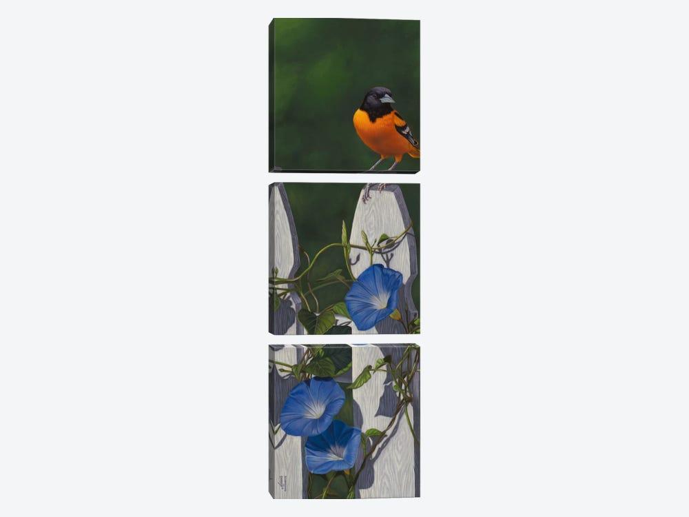 Oriole & Morning Glories by Jeffrey Hoff 3-piece Canvas Art Print