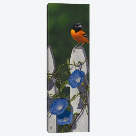 Oriole & Morning Glories Canvas Print #JHO34} by Jeffrey Hoff Canvas Art