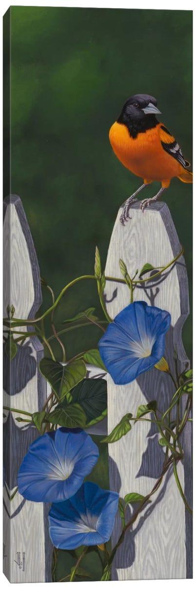 Oriole & Morning Glories Canvas Art Print