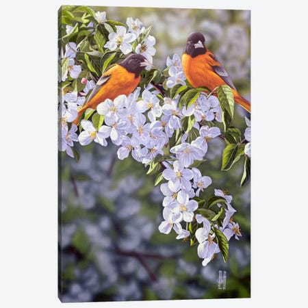 Orioles In The Orchard Canvas Print #JHO35} by Jeffrey Hoff Canvas Artwork
