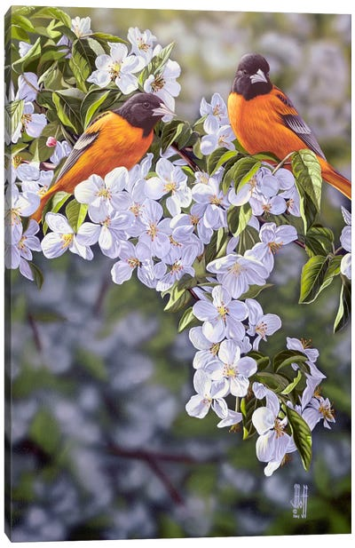 Orioles In The Orchard Canvas Art Print