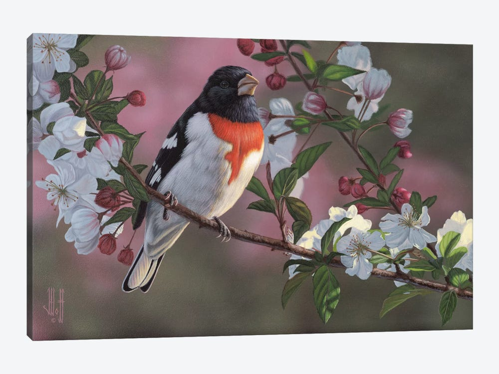 Rose Breasted Grosbeak & Apple Blossoms by Jeffrey Hoff 1-piece Canvas Artwork