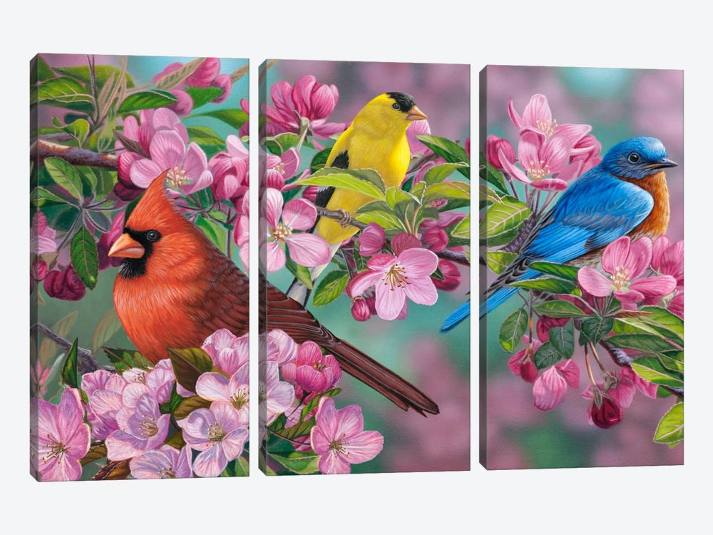 Songbird Colors by Jeffrey Hoff 3-piece Canvas Print