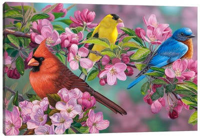 Songbird Colors Canvas Art Print