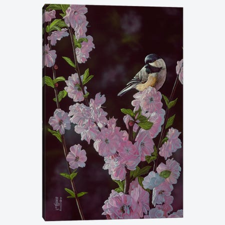 Springtime Blossoms Canvas Print #JHO45} by Jeffrey Hoff Canvas Print