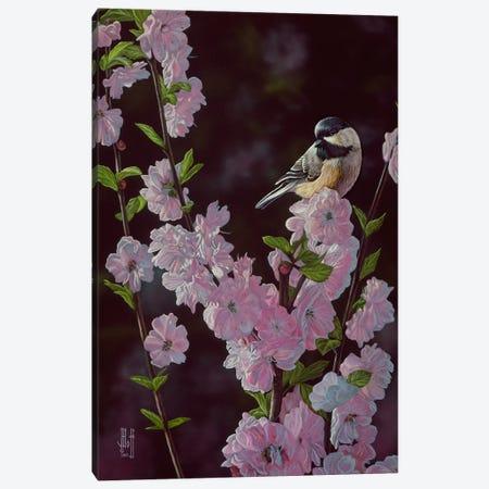 Springtime Blossoms Canvas Print #JHO45} by Jeffrey Hoff Canvas Print