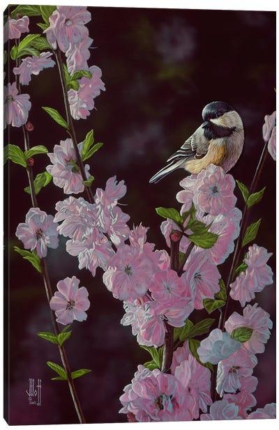 Springtime Blossoms Canvas Art Print