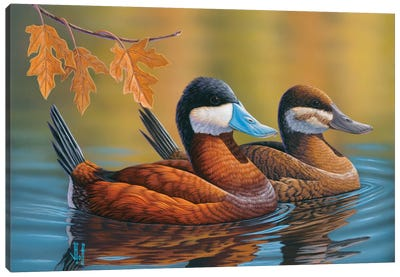 Stiff-Tailed Ruddy Ducks Canvas Art Print