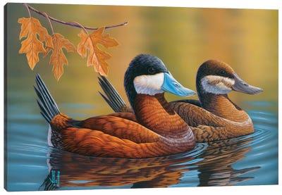Stiff-Tailed Ruddy Ducks Canvas Art Print