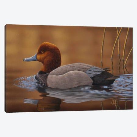 Sunlit Swim (2014 Iowa Duck Stamp) Canvas Print #JHO48} by Jeffrey Hoff Canvas Artwork