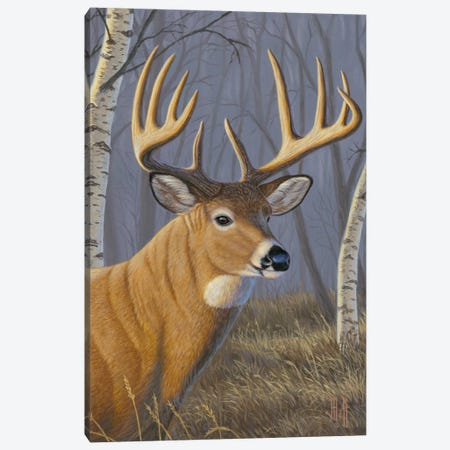 Sunlit Whitetail Canvas Print #JHO49} by Jeffrey Hoff Canvas Wall Art