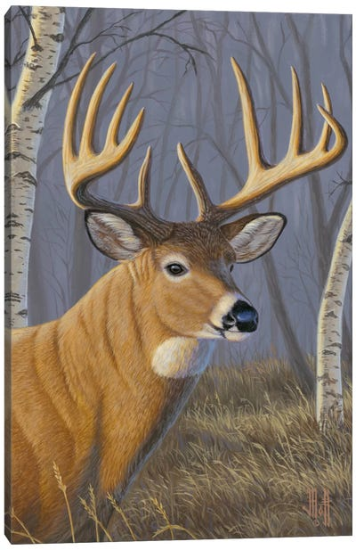 Sunlit Whitetail Canvas Print #JHO49