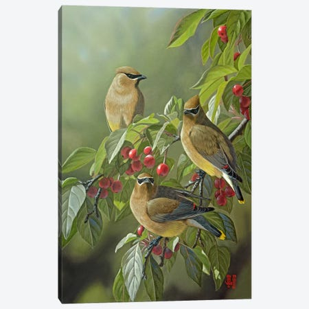 Three's Company Canvas Print #JHO51} by Jeffrey Hoff Canvas Art Print