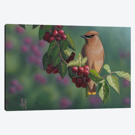 Waxwing & Berries Canvas Print #JHO52} by Jeffrey Hoff Canvas Print