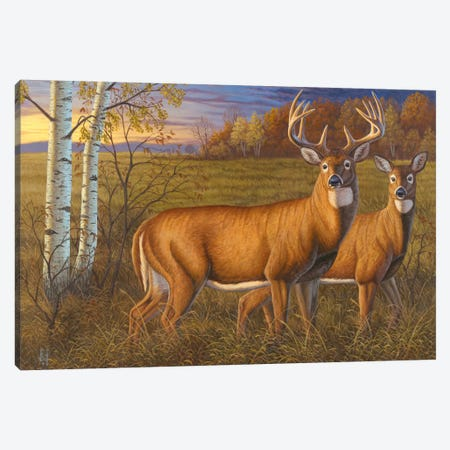 Whitetail Dawn Canvas Print #JHO53} by Jeffrey Hoff Canvas Print