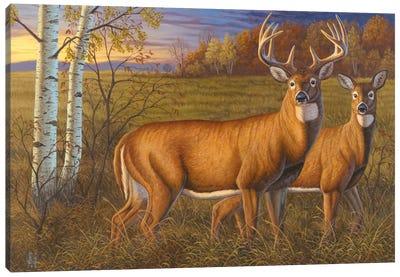 Whitetail Dawn Canvas Art Print