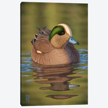 Wigeon Canvas Print #JHO54} by Jeffrey Hoff Canvas Artwork