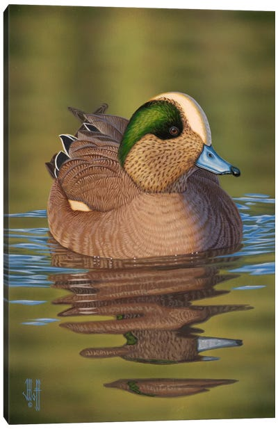 Wigeon Canvas Art Print