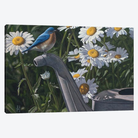 Bluebird & Daisies Canvas Print #JHO5} by Jeffrey Hoff Art Print