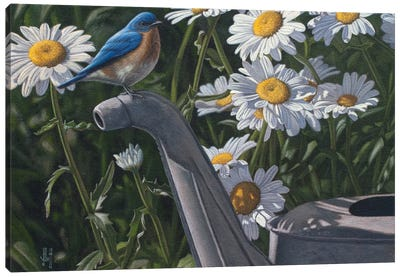 Bluebird & Daisies Canvas Art Print