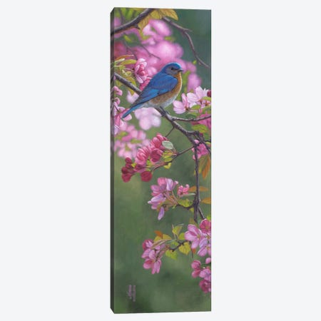 Bluebird & Pink Blossoms Canvas Print #JHO6} by Jeffrey Hoff Canvas Art Print