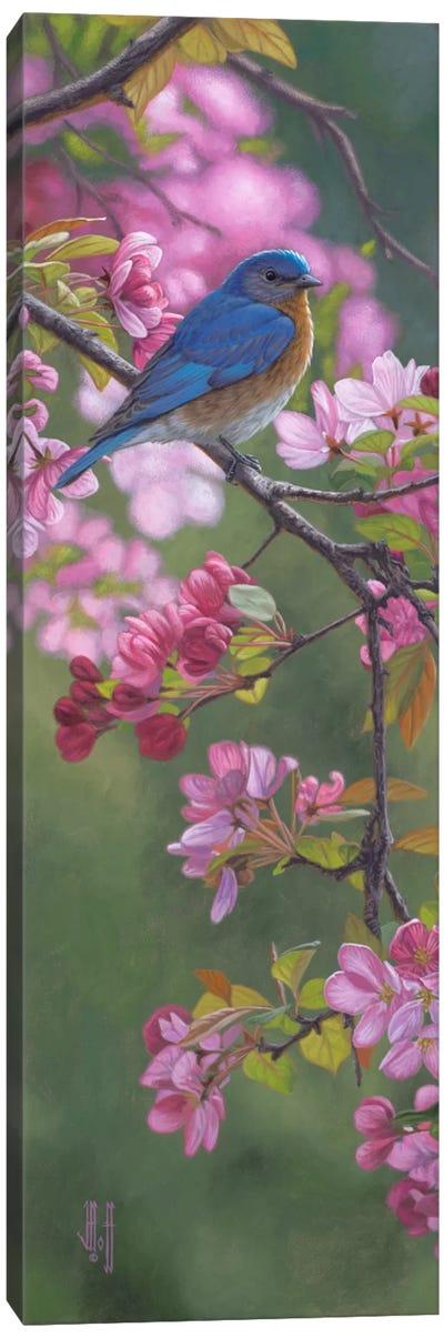 Bluebird & Pink Blossoms Canvas Print #JHO6
