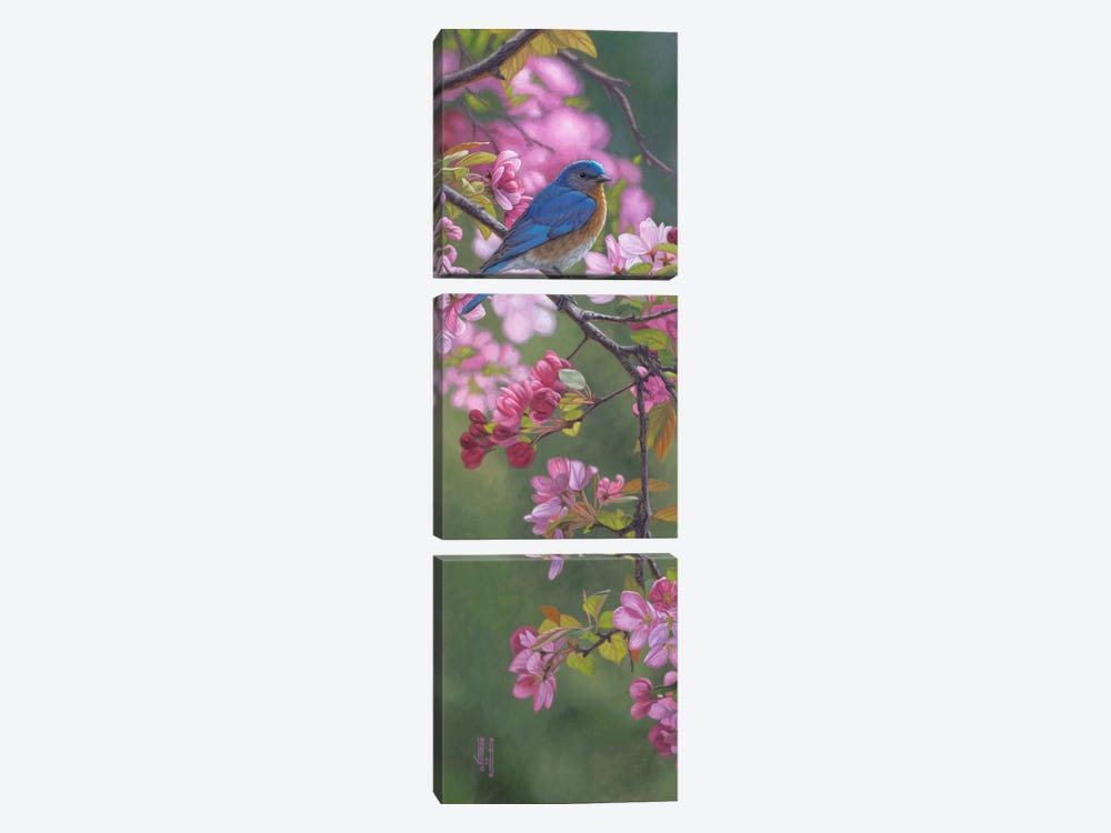 Bluebird & Pink Blossoms by Jeffrey Hoff 3-piece Canvas Wall Art