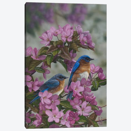 Bluebirds & Spring Blossoms Canvas Print #JHO7} by Jeffrey Hoff Art Print