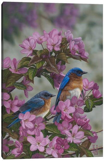 Bluebirds & Spring Blossoms Canvas Print #JHO7
