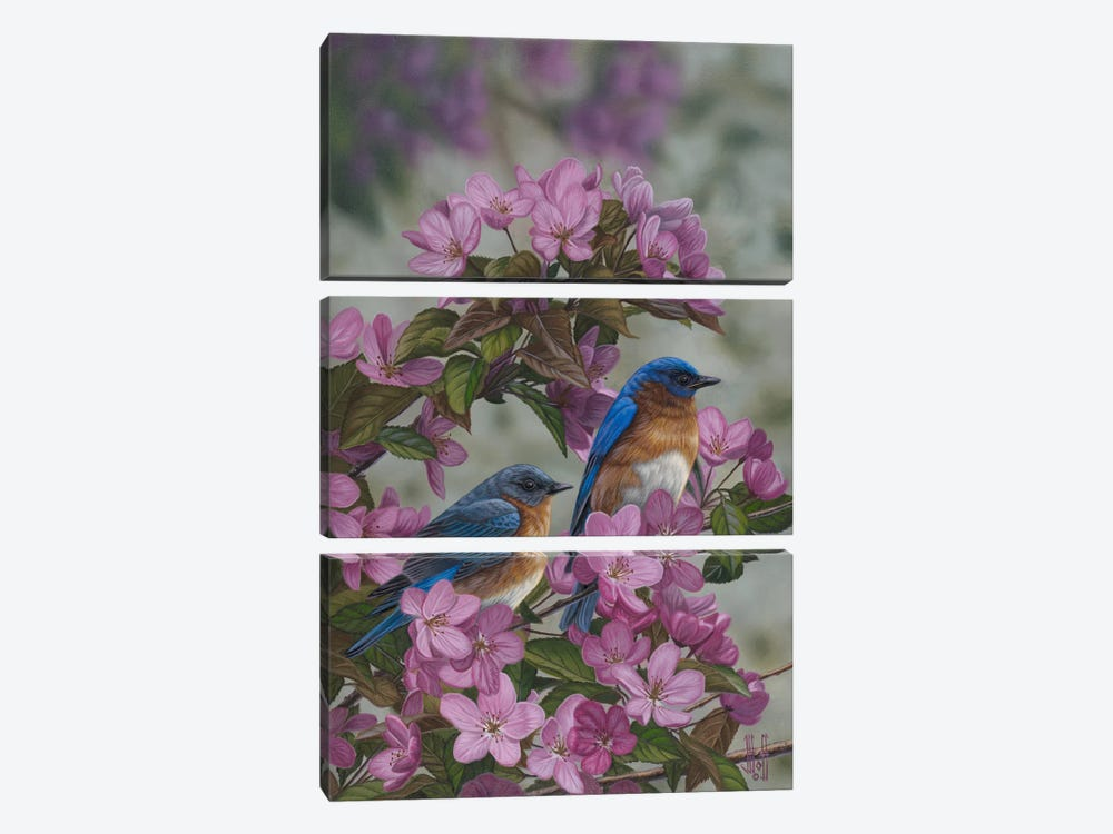 Bluebirds & Spring Blossoms by Jeffrey Hoff 3-piece Canvas Print