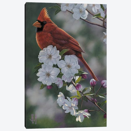 Cardinal & Spring Blossoms Canvas Print #JHO8} by Jeffrey Hoff Canvas Wall Art