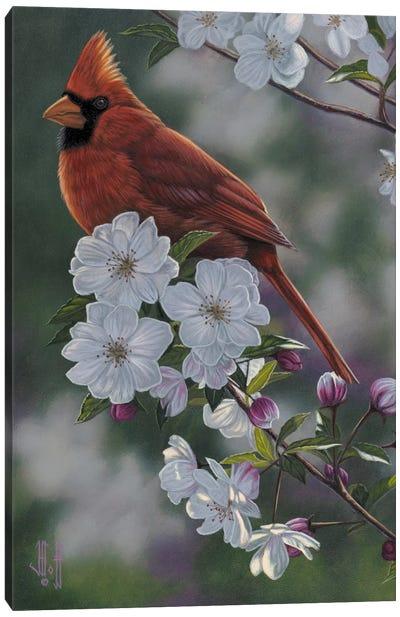 Cardinal & Spring Blossoms Canvas Print #JHO8