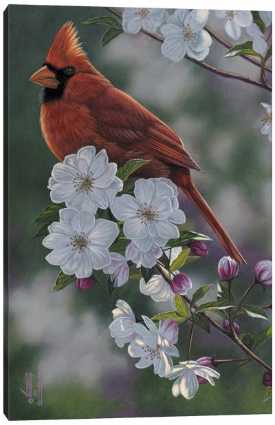 Cardinal & Spring Blossoms Canvas Art Print