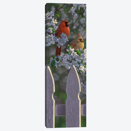 Cardinals & Apple Blossoms Canvas Print #JHO9} by Jeffrey Hoff Canvas Artwork