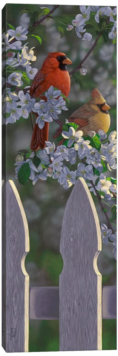 Cardinals & Apple Blossoms Canvas Art Print