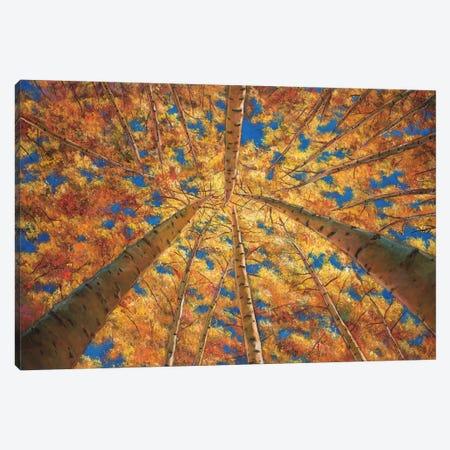 Ascension Canvas Print #JHR4} by Johnathan Harris Art Print