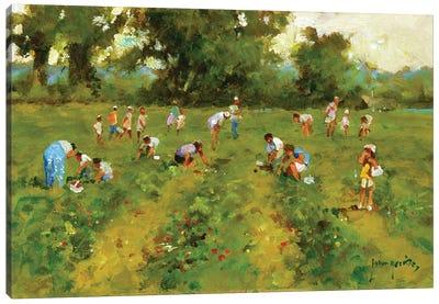Summer Strawberry Picking Canvas Art Print