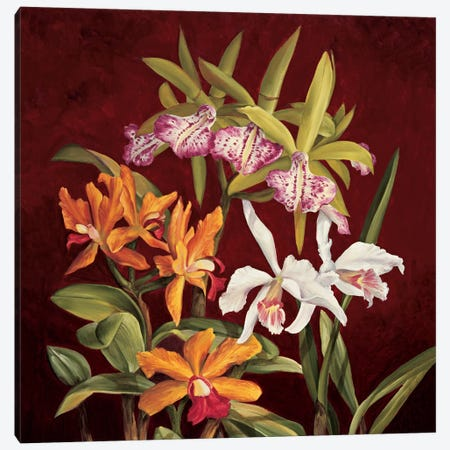 Orchid Trio II Canvas Print #JIM10} by Rodolfo Jimenez Canvas Art