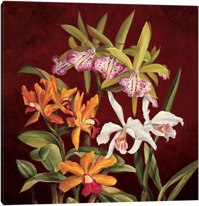 Orchid Trio II Canvas Art Print
