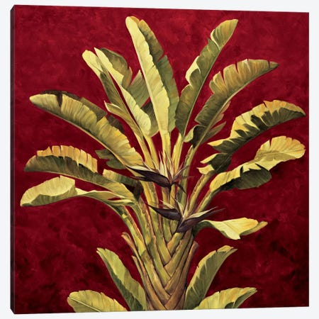 Traveler's Palm Canvas Print #JIM19} by Rodolfo Jimenez Canvas Art