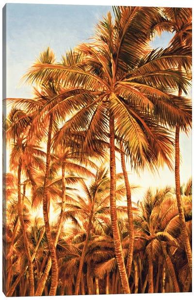 Island Sunset I Canvas Print #JIM6