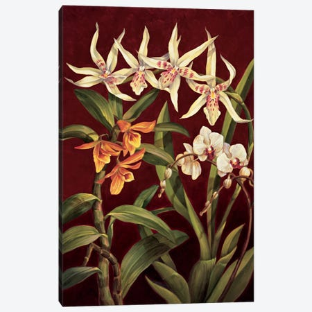 Orchid Trio I Canvas Print #JIM9} by Rodolfo Jimenez Canvas Art Print