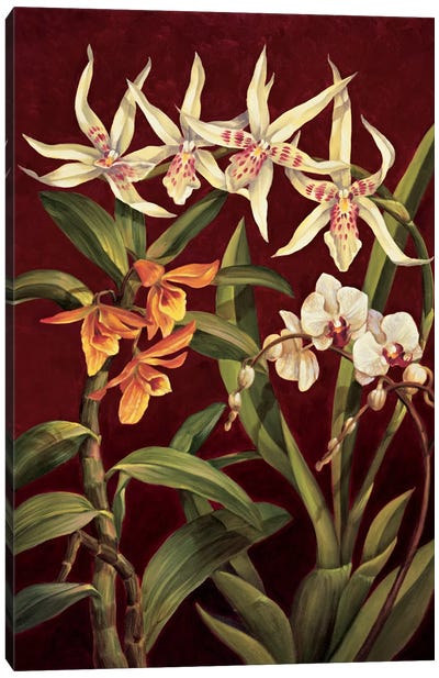 Orchid Trio I Canvas Art Print