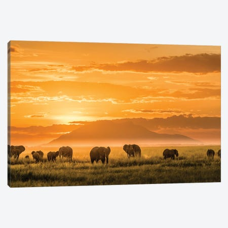 Golden Africa Canvas Print #JJC2} by John J. Chen Canvas Art