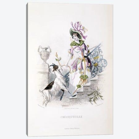 Chevrefeuille (Honeysuckle) Canvas Print #JJG1} by J.J. Grandville Canvas Wall Art