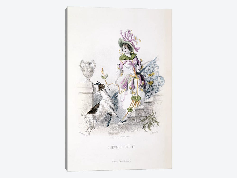 Chevrefeuille (Honeysuckle) by J.J. Grandville 1-piece Canvas Art