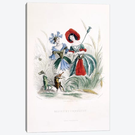 Cornflower & Poppy (Bleuet et Coquelicot) Canvas Print #JJG2} by J.J. Grandville Canvas Wall Art