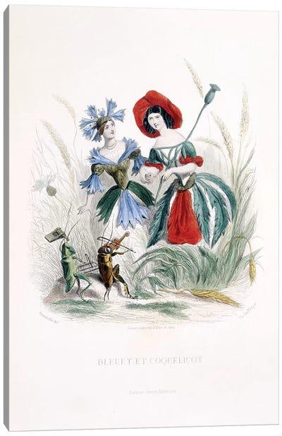 Cornflower & Poppy (Bleuet et Coquelicot) Canvas Art Print